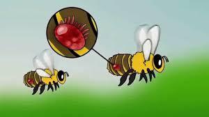 Honey Bee And Varroa Mites Animation How Varroa Destructor Devastates Honey Bee Colonies
