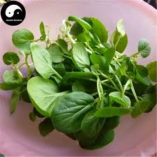 Buy Nanjing Cabbage Vegetables Semente 200pcs Plant Chinese Green