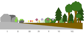 Primary And Secondary Succession Venn Diagram The Differences Between Primary Secondary Succession 334292500791