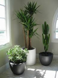 Gallery For > House Plants Decor. . Decorative ...