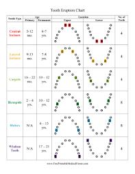 Printable Tooth Eruption Chart