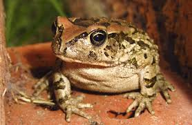 image of a frog. Perfect Frog For Image Of A Frog T