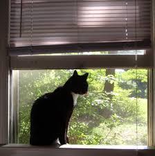 Verhängnisvoller Instinkt Offene Fenster Können Für Katzen