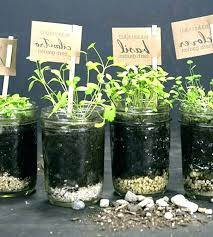 kitchen window herb garden kit indoor canadian tire windo