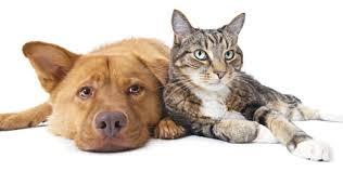 Resultado de imagem para cães e gatos