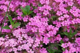 Risultati immagini per immagini leggere di piccoli fiorellini