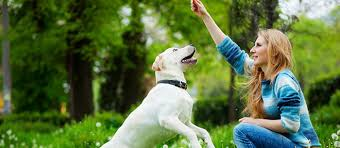 10 Things To Look For In A Pet Sitter Care Com