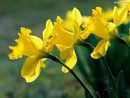 Znalezione obrazy dla zapytania kwiat nadziei