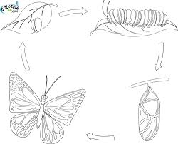Butterfly Life Cycle Coloring Page Free Printable Butterfly ...