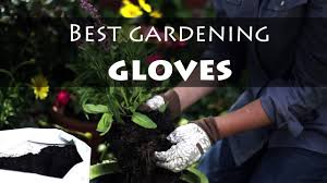 the scholarship program magazine for gardeners best gardening gloves