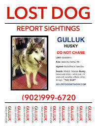 Lost Pet Poster Template LOST DOG POSTER Sackville Halifax Co NS Husky Male 24 Yrs 5