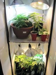 best closet closet growing setup closet grow ideas closet grow room com closet grow