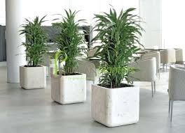 modern office plants. Modern Artificial Plants Office Interior Landscaping Tropical  Live Plant Displays O