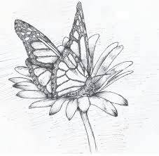28 collection of butterfly on a flower drawing high quality free 6a90275d9082960d3abd0737ae1257a8 drawn butterfly flower sketch