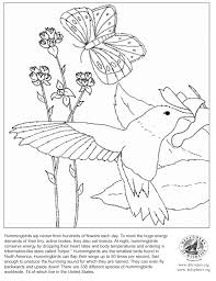 Small Picture Hummingbird Coloring Page