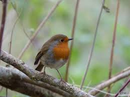radley lakes previous seasonal wildlife news  previous seasonal wildlife news 2014