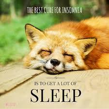 Sleep Quotes Impressive 48 Literary Quotes About Sleep Hack To Sleep