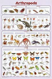 Laminated Arthropods Insects Educational Science Chart Crustacea Hexaoda Poster 24 X 36