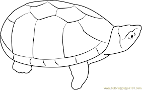 Small Picture Musk Turtle Coloring Page Free Turtle Coloring Pages