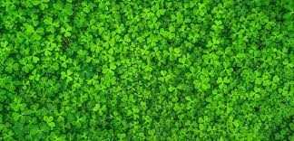 Odds Ratios and St. Patrick's Day: Are <b>4</b>-<b>Leaf</b> Clovers Really All That ...