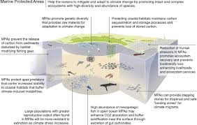 Marine Reserves Can Mitigate And Promote Adaptation To Climate