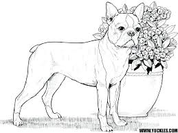 realistic puppy coloring pages. Interesting Realistic Realistic Puppy Coloring Pages Of  Preschool To Humorous Draw Page   On Realistic Puppy Coloring Pages O