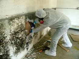 how to get rid of mold on concrete walls how to remove mold from painted walls