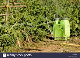 green pesticide applicator and dispenser pump next to vegetable garden spain stock image