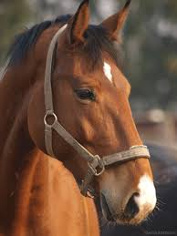 professional horse face photography. Interesting Photography Every 5 Minutes An American Horse Is Slaughtered For Human Consumption  Stop The Slaughter On Professional Horse Face Photography O