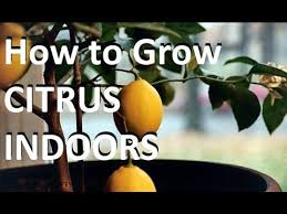 Fruit Trees Can Be Lightly Pruned Any Time Of Year U2013 Las Vegas How Often Should I Water My Fruit Trees