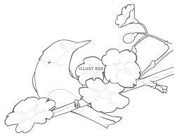 無料イラスト 桜とメジロの塗り絵