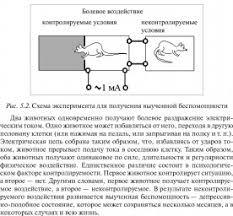 КОНТРОЛЬНЫЙ ЭКСПЕРИМЕНТ это что такое КОНТРОЛЬНЫЙ ЭКСПЕРИМЕНТ  Схема эксперимента для получения выученной беспомощности