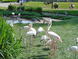 garden flamingos. Wilhelma Zoo And Botanical Garden: Flamingos Garden T
