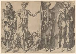 anatomy essays directional terms in anatomy examples body anatomy  anatomy in the renaissance essay heilbrunn timeline of art two flayed men and skeletons