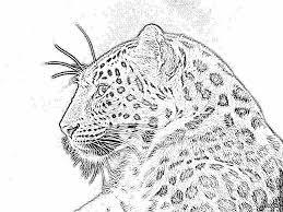Coloriage Le Leopard Imprimer Pour Les Enfants Dessin