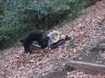 熊に襲われる