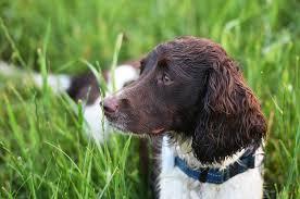 dog in tall green grass