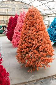 Shot of colored Christmas trees, flocked in different colors Stock Photo -  17405903
