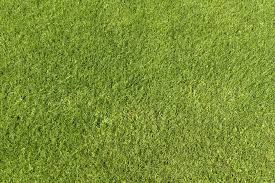 grass texture hd. Wonderful Texture Green Grass Texture 01 By SimoonMurray  With Hd U