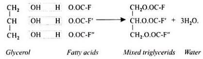 essay on lipids top essays organic compounds cells biology fatty acid esters be formed alcohols other than glycerol such as waxes the commonest types of fatty acids occurring in natural fats usually
