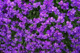 Purple Flowers Backgrounds Purple Flowers Texture Flowers Flower Background Flower