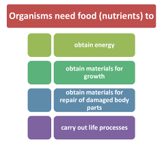 Nutrition In Plants Or Nutrients In Plants For Class 7 Cbse