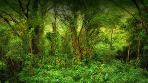 tropical rainforest raining. Modren Tropical Hawaiian Rainforest To Tropical Rainforest Raining O