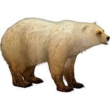 grolar bear size image grolar bear ulquiorra png zt2 download library wiki