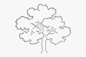 Template Tree Family Tree Outline Template Outline Pictures Of Tree