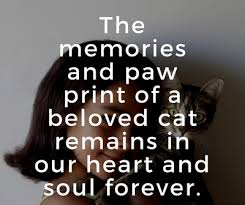Loss Of A Cat Quotes Best Quotes About Cat Death For You To Kiss Away The Pain EnkiQuotes