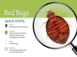 snapshot of the appearance and distribution of bed bugs