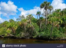 Myakka River Tide Chart Southwest Florida River Stock Photos Southwest Florida