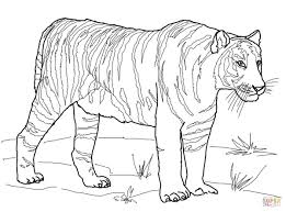 Small Picture Bengal Tiger coloring page Free Printable Coloring Pages