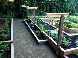 Backyard Grape Trellis Raised Beds On Different Levels And Building A Grape  Trellis From Raised Beds